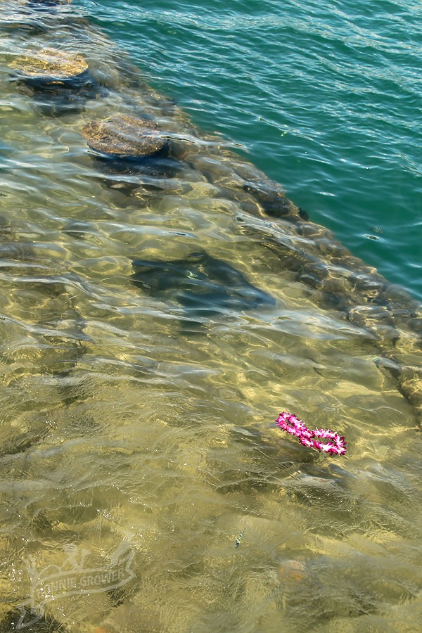 A single lei floats above the wreckage of USS Arizona (BB-39) during a remembrance ceremony in 2010.  Photo courtesy Bonnie Grower Photography (c) 2010