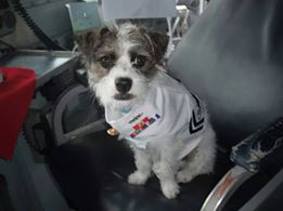 Petty Officer Second Class Dog Wiley Jarvis Thomas in his dress whites for homecoming in July 2011. (Photo Credit: Matthew Rick)